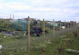 Hook Allotments